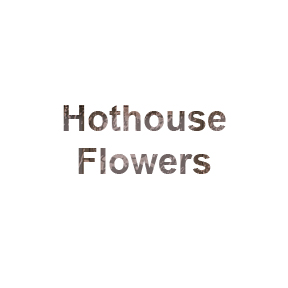 Roll over of Hothouse Flowers art work